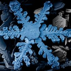 LT-SEM image of a hexagonal dendritic snow crystal captured by William Wergin and Eric Erby at USDA ARS. One of the first images of a snowflake captured using a SEM. Pseudocolored